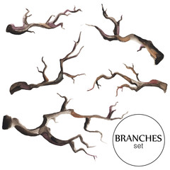 Hand drawn watercolor branches set.