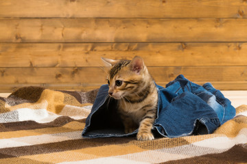 kitten sneaks out of the blue jeans trousers