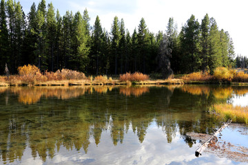 Wall Mural - Peaceful River Forest Reflection