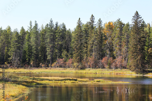 Wall mural Mountain River at edge of Forest