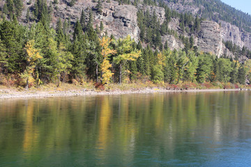 Wall Mural - Flathead River Banks with Fall Colors