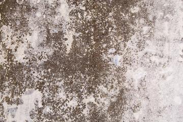 White Grey Wall Grunge Cement Texture Background