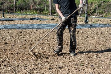 Many raking tilled soil at a farm or nursery