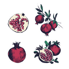 Pomegranate hand drawn set. Collection on white background, isolated fruit whole, cutaway, on a branch. Vector colorful vintage style illustration.