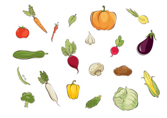 Collection pictures -- vegetables / Set graphic vector illustrations with different vegetables