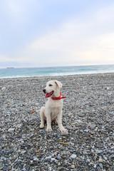 Cucciolo Labrador in spiaggia