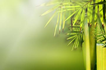 Beautiful bamboo nature background.