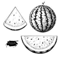 Watermelon and slice vector drawing set. Isolated hand drawn berry on white background.