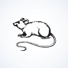 Mouse. Vector drawing