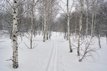 Ski track on a snowy forest glade.