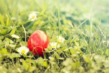 Red Easter egg in green grass