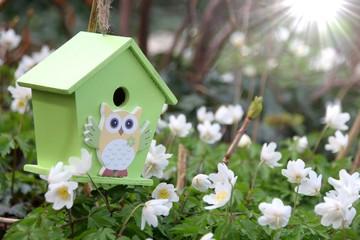 vogelhaus im frühling