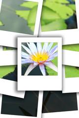 Lotus white instant photo