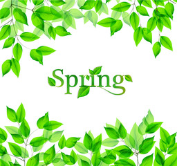 Isolated leaves with spring lettering.Vector illustration.EPS10