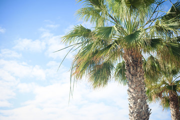 View of palm tree leaves over blue sunny sky