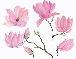 Watercolor painting blooming magnolia flowers set