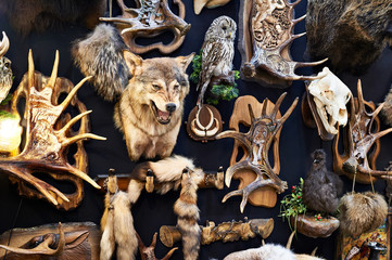Wall with hunting trophy