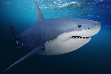 The Great White Shark - Carcharodon carcharias is a world's largest known extant predatory fish. Underwater photo of big fish in a deep sea.