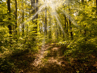 Sun rays shining through the trees and on the path