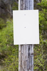Fototapeta A blank sign on a telephone pole awaits your announcement, ad or message. obraz