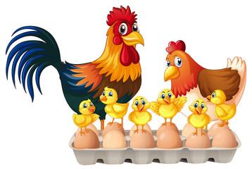 Chickens and eggs in carton box