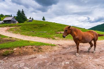 Horses on the hill Partia Piatra Graitoare in National Park Apuseni, Romania