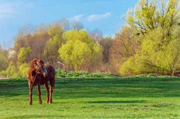 Horse on a grass background