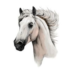 the white horse head profile sketch vector chart color picture