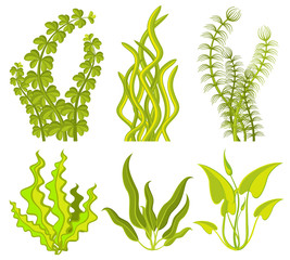 Underwater seaweed vector elements