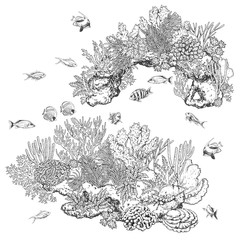 Reef Corals and Fishes