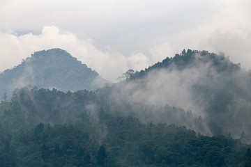 Cloud forest near the Recinto del Pensamiento nature reserve near Manizales, Colombia.