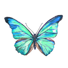 beautiful blue butterfly, isolated  on a white,watercolor
