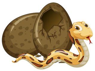 Brown snake hatching egg