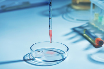Scientist dropping a sample into a Petri dish