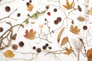Autumn dried elements isolated on white background