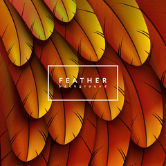 Colorful feathers background. Abstract feather composition. Eps10 vector illustration.