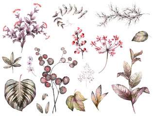 Big Set watercolor elements - herbs, leaf. collection garden and wild herb, leaves, branches, illustration isolated on white background, eucalyptus, exotic, tropical leaf.