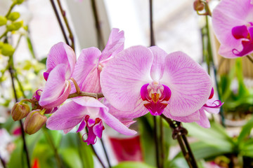 beautiful pink orchid flower room