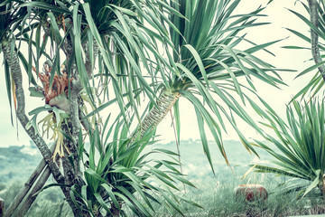 Palm trees, vintage green toned and stylized, coconut tree,summer tree, retro
