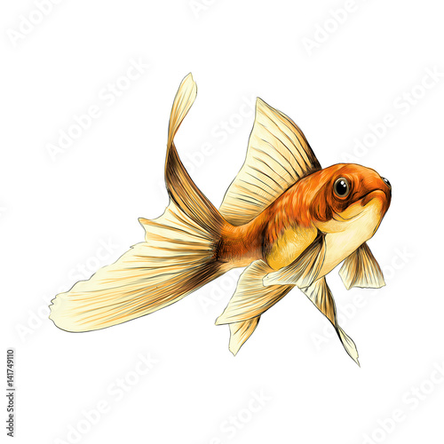 Goldfish sketch vector graphics color drawing of a yellow - Croquis poisson ...