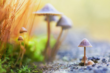 Lovely small mushrooms. Warm sunlight. Abstract macro picture. Wild nature. Life of insects.