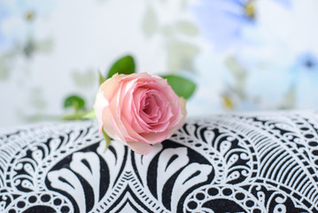 Pink rose on black and white surfaces