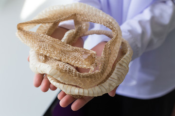 Shedded snake skin for education in the classroom.