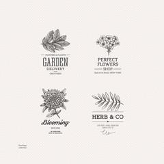 Vintage nature logo collection. Engraved logo set. Vector illustration
