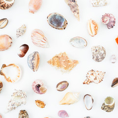 Ocean shells isolated on white background. Flat lay. Top view. Ocean pattern.