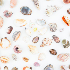 Ocean tropical shells isolated on white background. Flat lay. Top view.