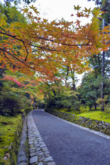 Colourful leaves in Japanese garden in Kyoto during autumn
