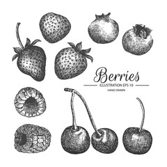 Berries hand drawn collection by ink and pen sketch.