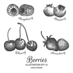 Berries hand drawn illustration by ink and pen sketch. Isolated vector design for using in natural or organic fruit product and health care goods.