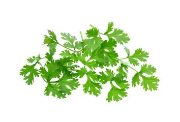 Fresh coriander leaves on white background